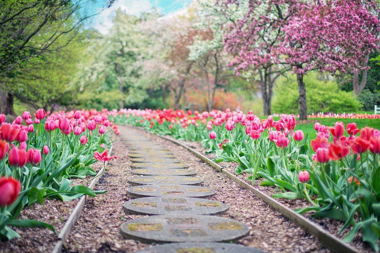 allée de jardin fleurie