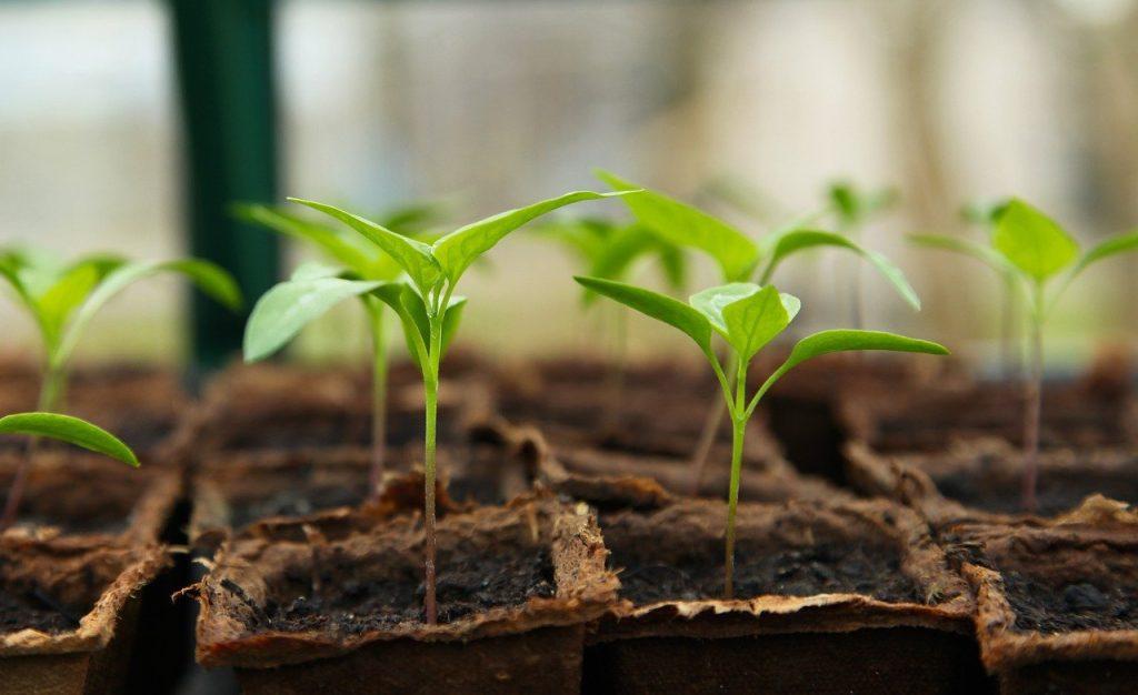 légumes faciles à jardiner