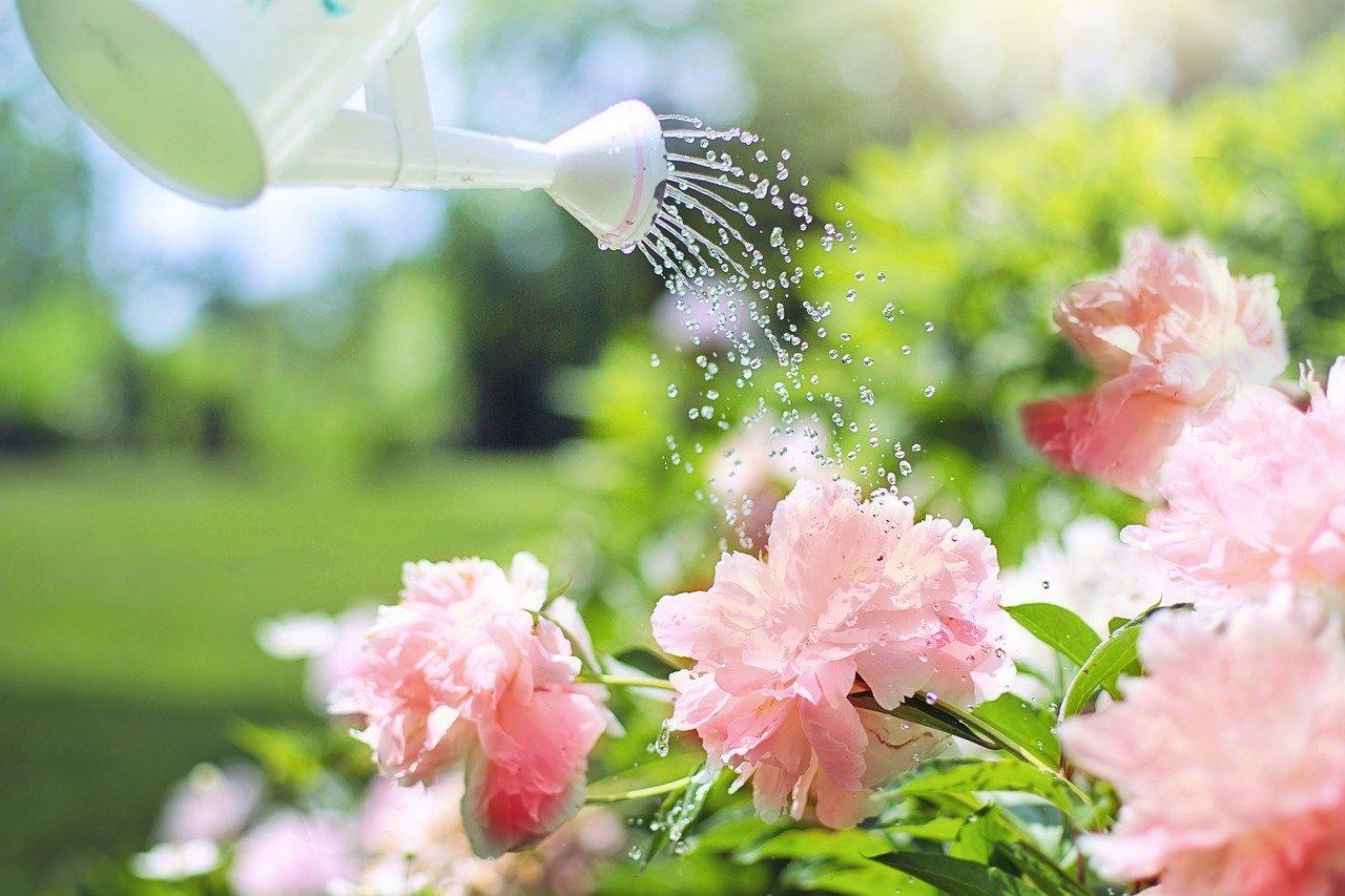 arroser les fleurs