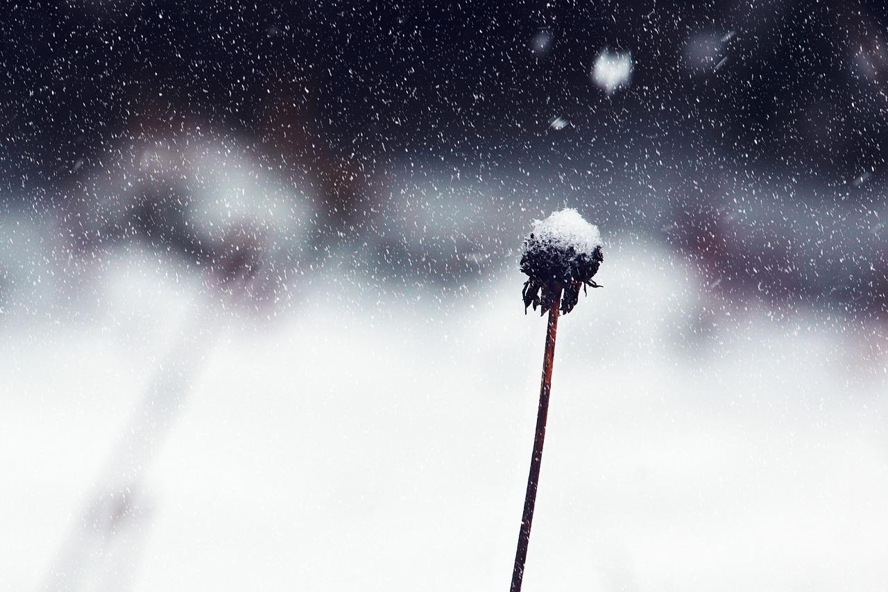 plante hiver dans le jardin