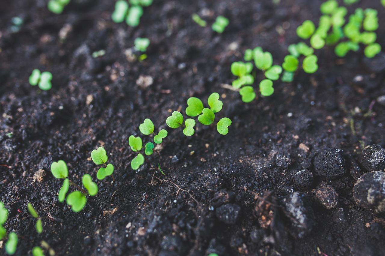 graines semées à la main