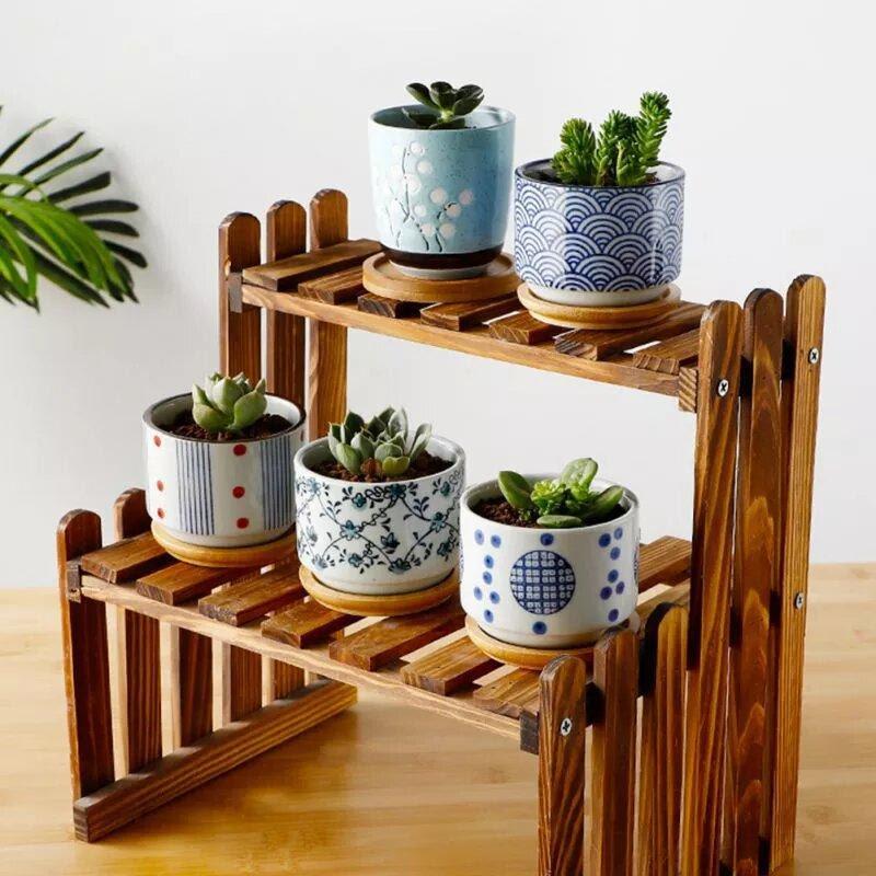 cactus sur support d'intérieur